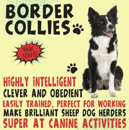 Border Collie Metal Wall Sign
